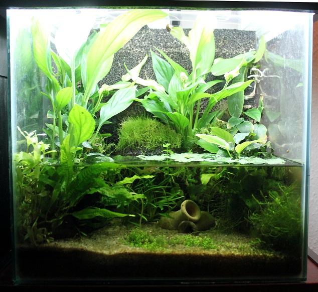 Akvarier/Aquarium