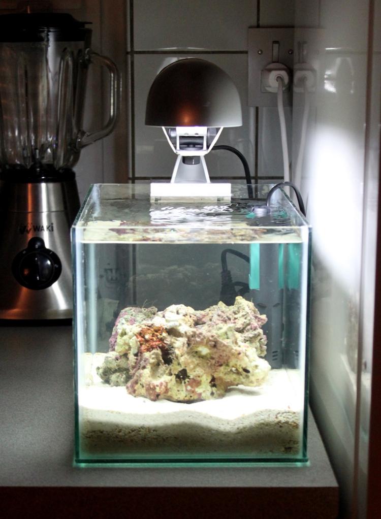 Pico Reef