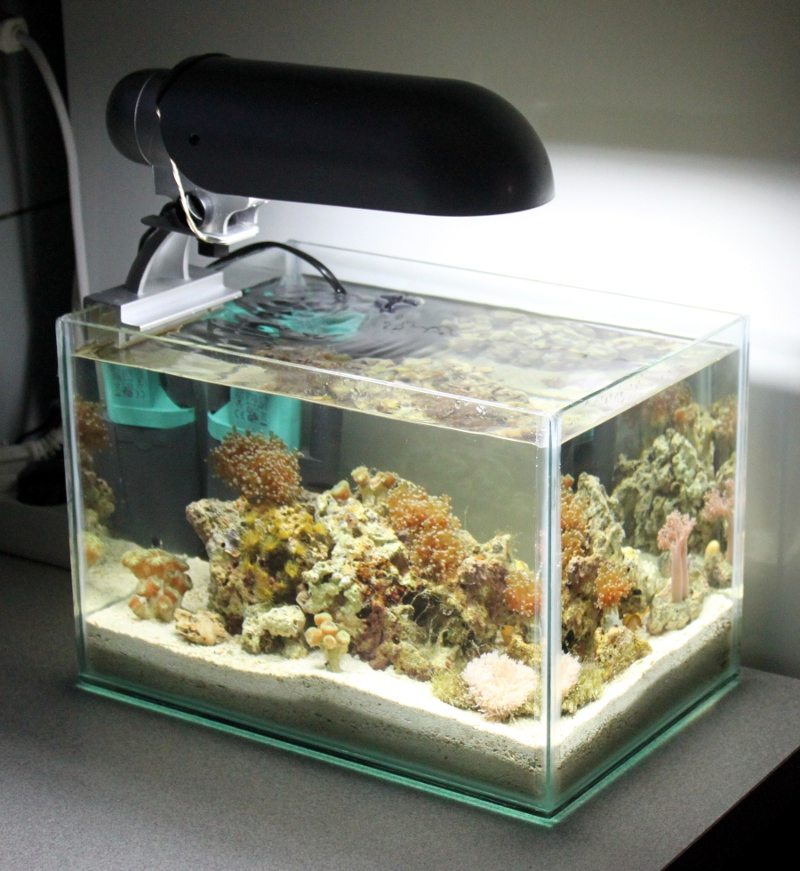 12L Pico Reef